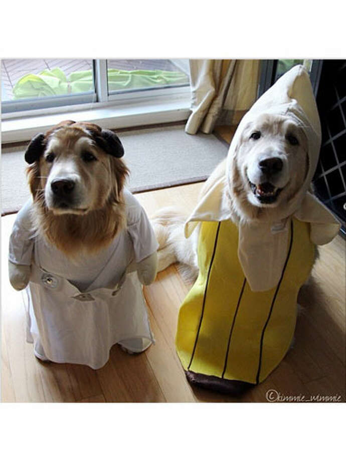 Banana RoyaleStar Wars fans can dress their pups as Princess Leia, with side buns covering up floppy ears. And any pooch looks sweet as a funny fruit.Find a similar Princess Leia dog costume at Amazon.comand a banana dog costume at Amazon.com. A Guide To Younger-Looking Hair20 Ways To Spend Less and Save MoreHealthy Kid-Friendly Breakfast RecipesHair and Makeup Tricks To Look YoungerThe Tiniest Houses That People Actually Live In9 Must-Have Mason Jar Accessories Photo: Courtesy Of Instagram