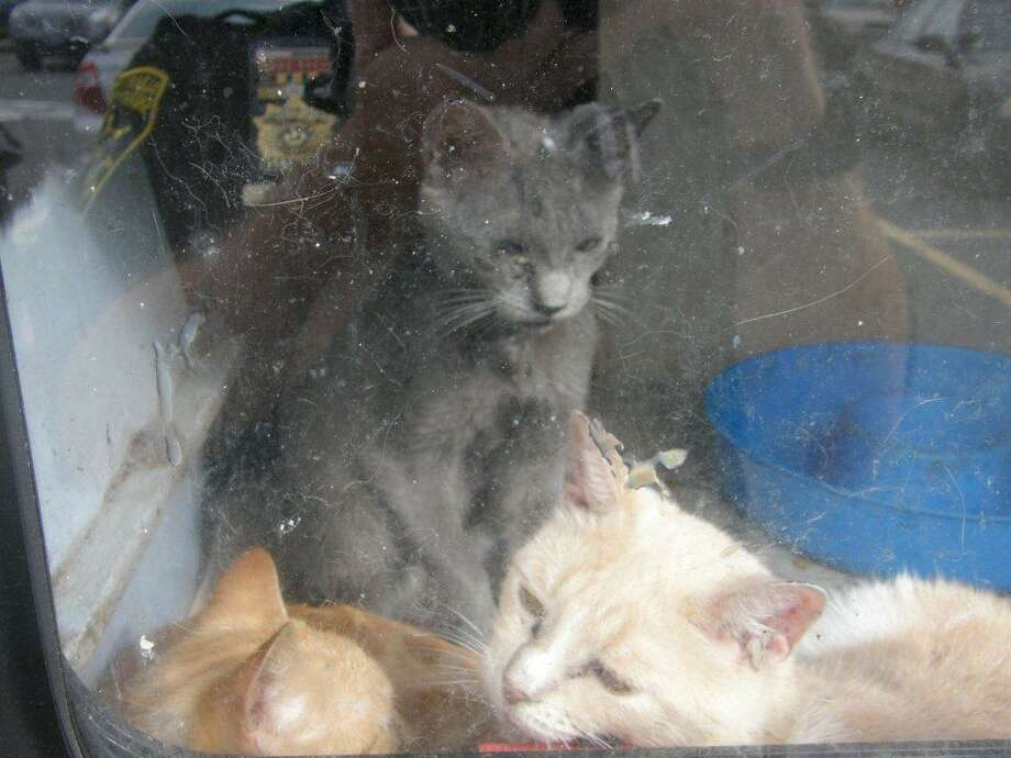 The Albany County Sheriff's Office arrested Shirley and Frances Stannard on one count each of failure to provide sustenance of animals for poor care to their cats. Deputies said 45 cats were living in the women's trailer in Voorheesville. (Albany County Sheriff's Office photo)