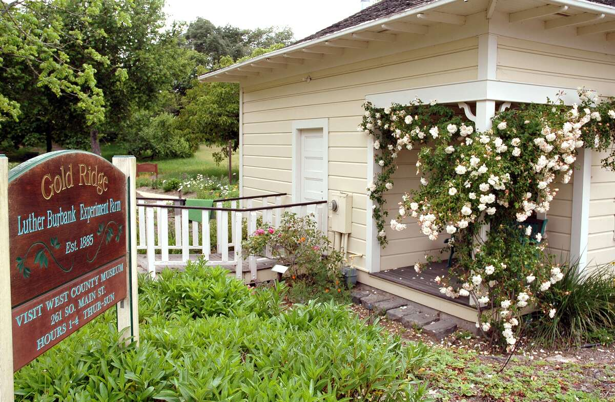 The tranquil Gold Ridge Farm, eight miles away from the Luther Burbank Home and Gardens in Santa Rosa, is where the agricultural science pioneer conducted his breeding experiments.