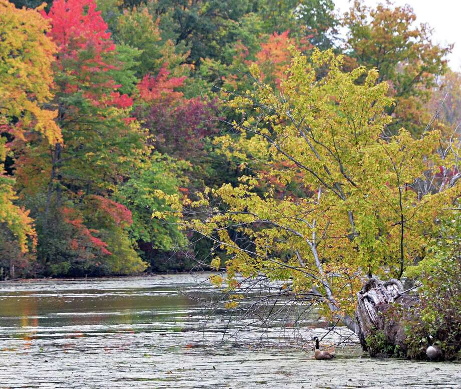 A lone Canada goose amid the turning fall colors at Ann Lee Pond Wednesday Oct. 1, 2014, in Colonie, NY.  (John Carl D'Annibale / Times Union) Photo: John Carl D'Annibale