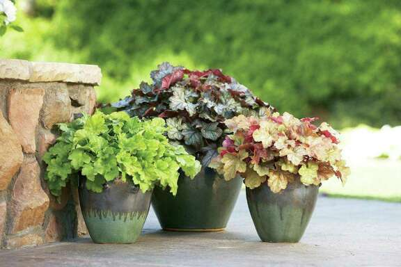 Sometimes simple is best. Three different varieties of heuchera, or Coral Bells, create a delightful corner of fall color. The varieties are Key Lime Pie, Licorice and Peach Melba.