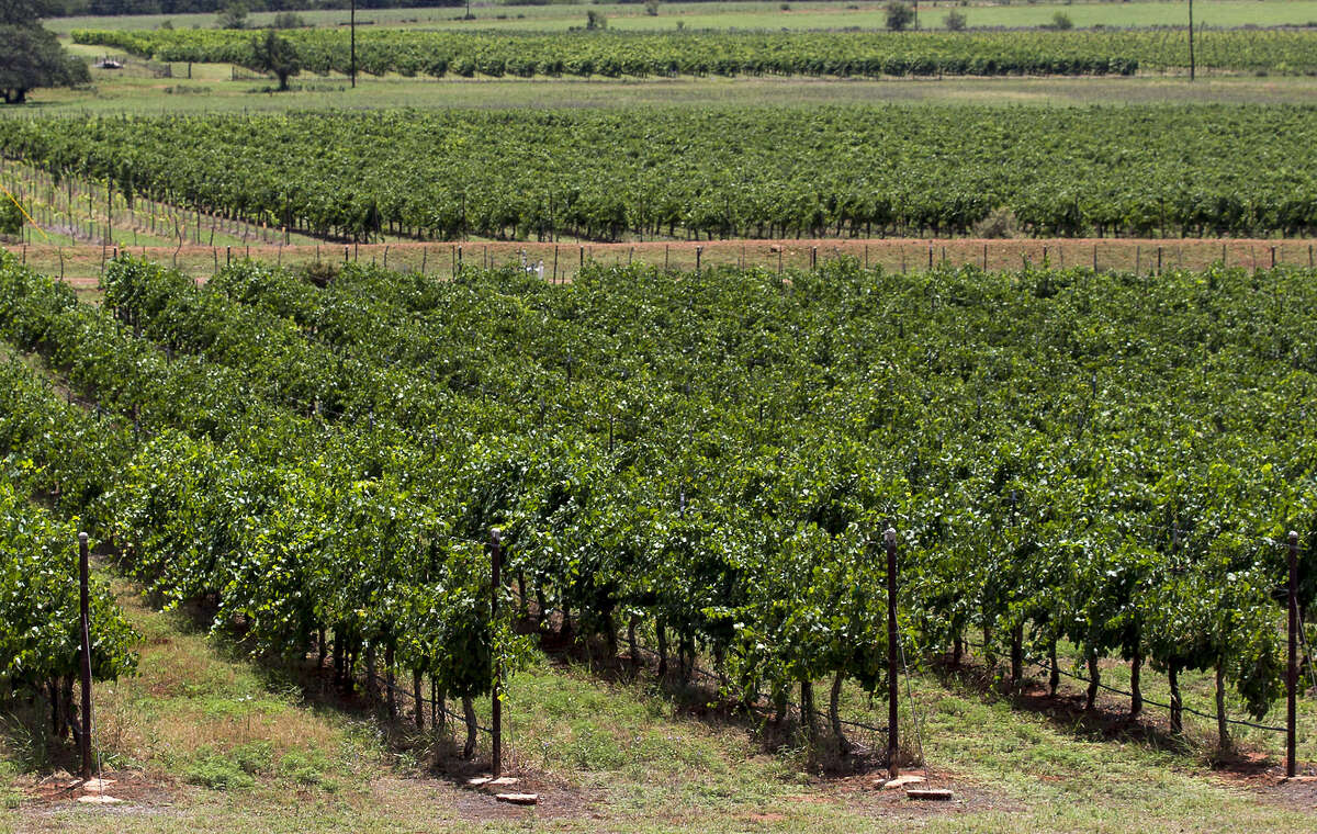 Vineyards are planted in eight officially recognized winegrowing regions, or American Viticultural Areas.