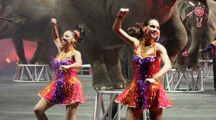 Ringling elephants will appear with the circus Oct. 23-26 in Bridgeport.