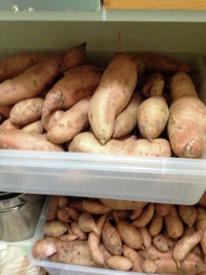 Sweet potatoes can be stored for consumption during fall, winter and early spring.