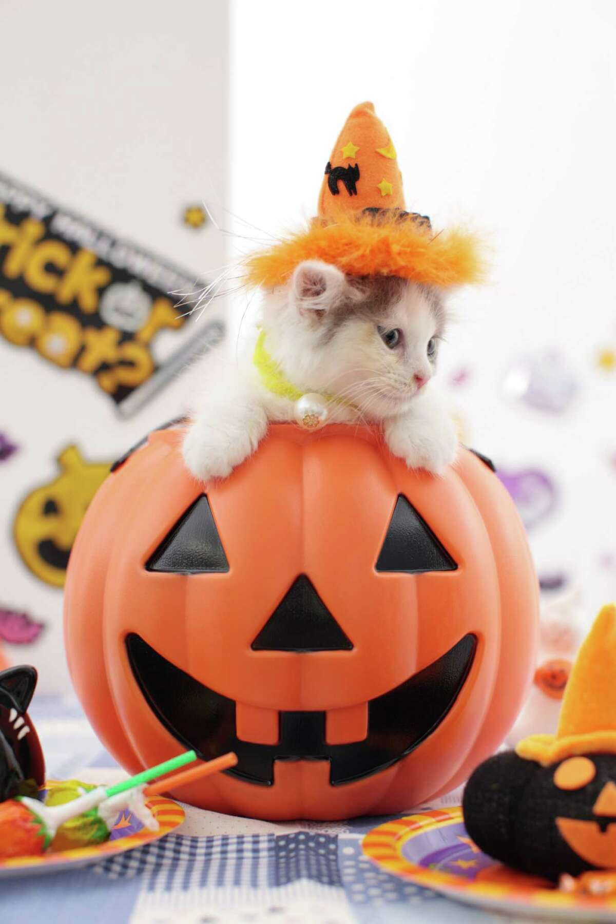 Putting a cat in a plastic pumpkin. Great photo idea, but remember: you have to sleep sometime.