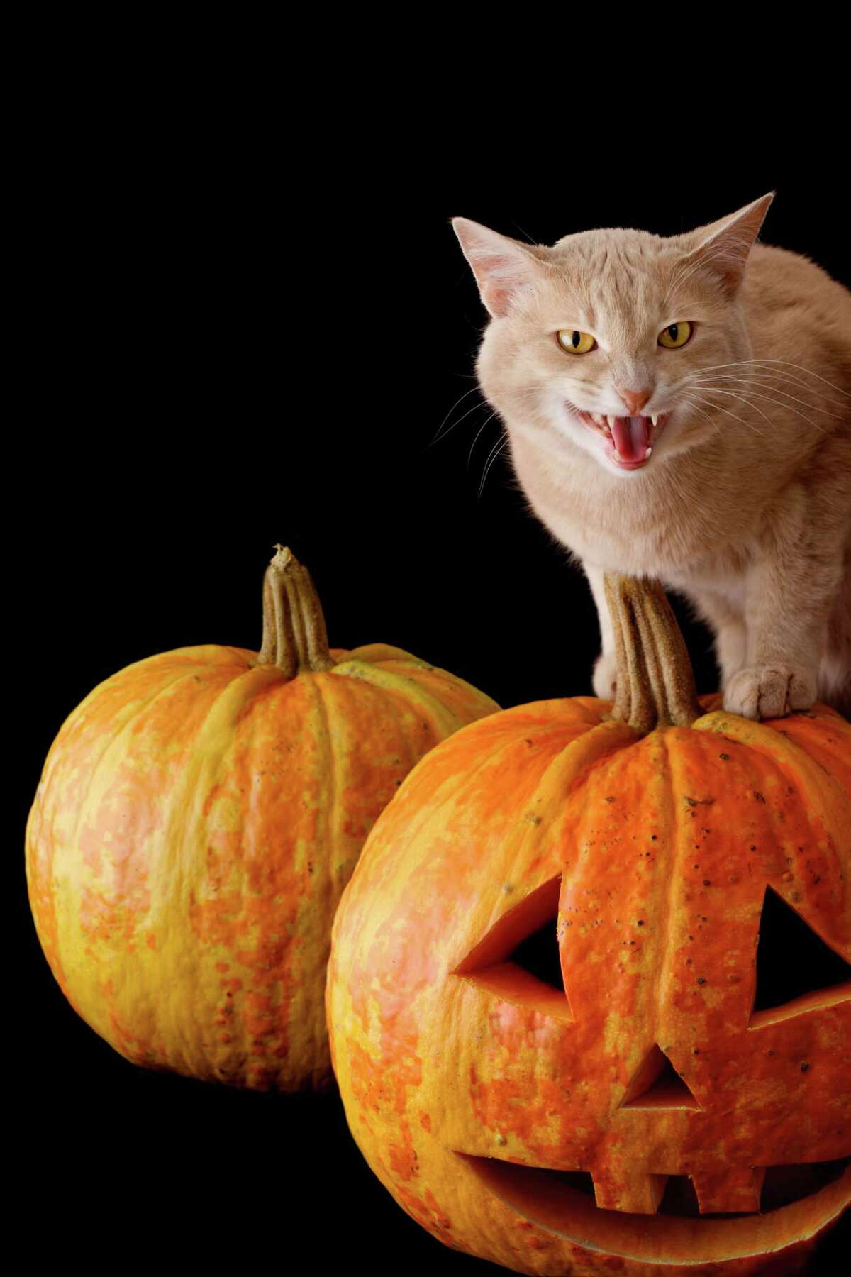 """""""I told you I wanted a SCARY pumpkin! He's smiling for Pete's sake!"""""""