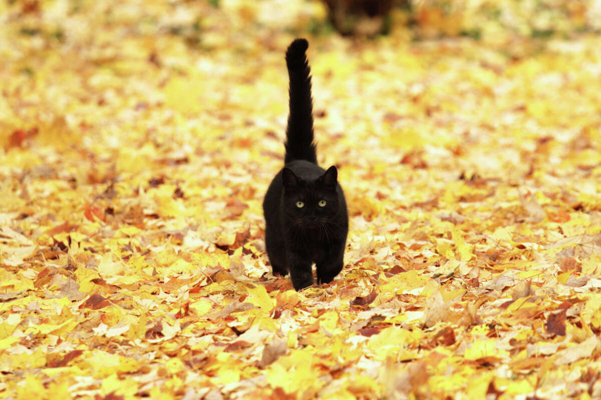 """""""I know the leaves are free, but seriously, if you wanted to hear me coming, I would have rather had a bell."""""""
