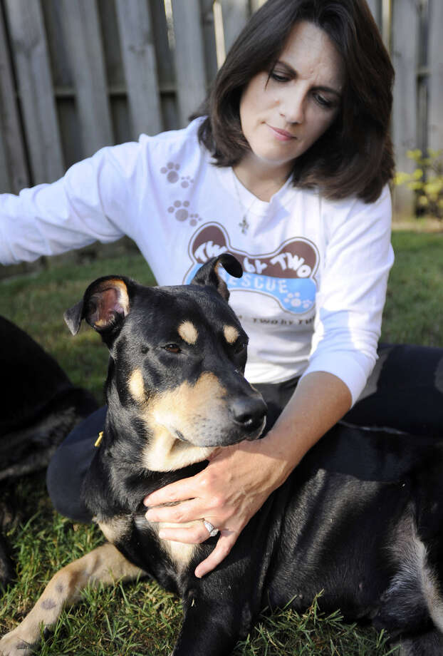 Lazarus, a mixed-breed dog who survived one euthanasia attempt and a car accident, sits by his new owner, Jane Holston, in Helena, Ala. on Wednesday, Oct. 1, 2014. Turned in to an animal shelter by his previous owner, a volunteer found the dog alive in the shelter the morning after it was twice injected with deadly chemicals. Holston adopted the dog from Two by Two Animal Rescue, which named him Lazarus after the man the Bible says Jesus raised from the dead. Photo: Jay Reeves, AP / AP
