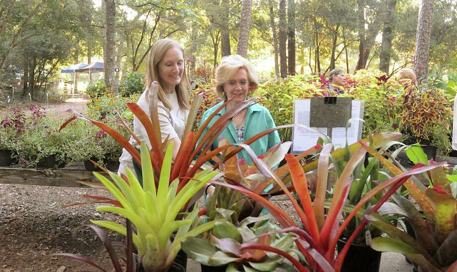 Volunteer Cindy Young helps Martha Burg choose some plants during the Mercer Arboretum & Botanic Gardens, 22306 Aldine Westfield Road in Humble, annual Autumn Plant Sale. Photo: David Hopper, Freelance / freelance
