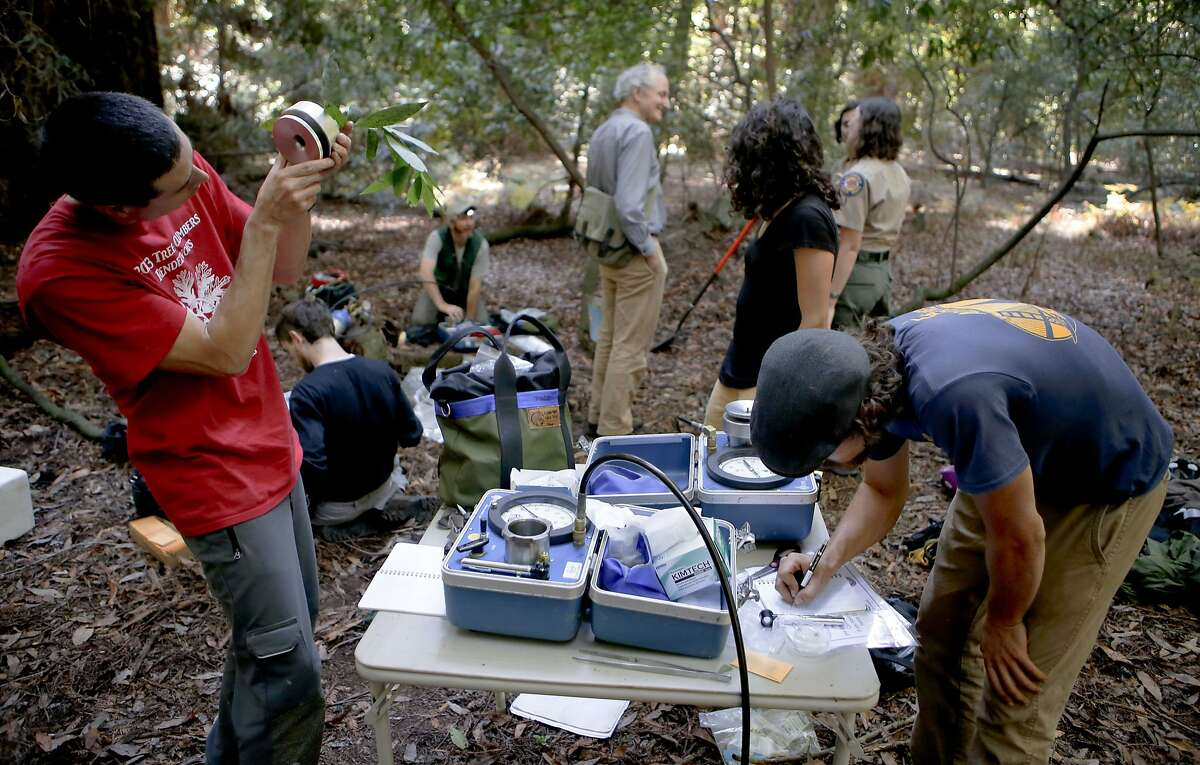 The team with their portable research equipment in the middle of the old growth Redwoods at Henry Cowell State Park in Felton , Calif., on Wednesday Oct. 1, 2014. A study by UC Berkeley researchers and San Francisco-based Save the Redwoods League is looking at whether or not the drought is hurting redwood, douglas fir and bay trees.