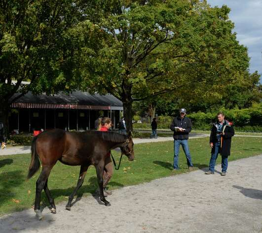 A weanling consigned by Harry L. Landry is shown to a potential buy as the inspection period winds down and the sale starts during the Fasig-Tipton Saratoga Fall Sale Monday afternoon Oct. 6, 2014 in Saratoga Springs, N.Y.  (Skip Dickstein/Times Union) Photo: SKIP DICKSTEIN / 10028901A