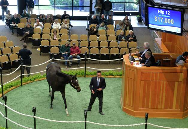A Stravinsky mare goes through the ring early in the first session during the Fasig-Tipton Saratoga Fall Sale Monday afternoon Oct. 6, 2014 in Saratoga Springs, N.Y.  (Skip Dickstein/Times Union) Photo: SKIP DICKSTEIN / 10028901A