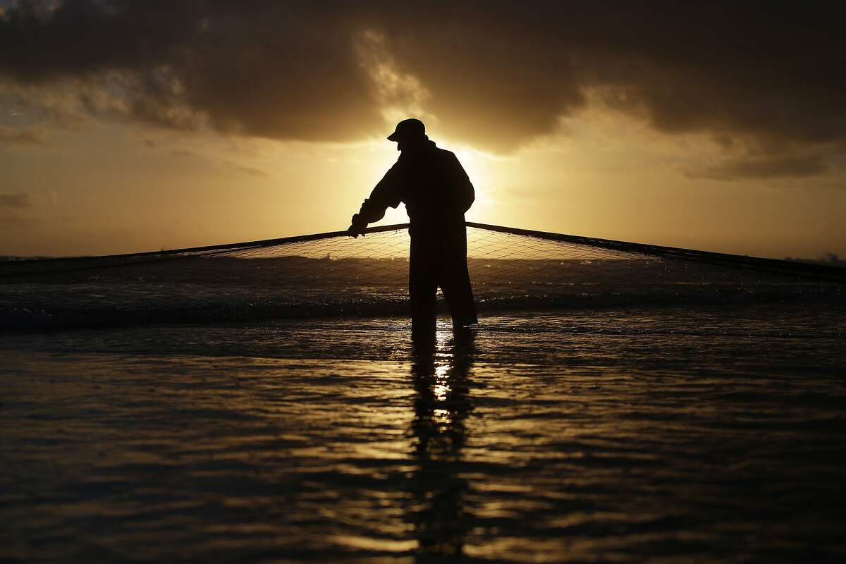 A Portuguese fisherman pulls a net out of the sea on the Caparica coast, near Lisbon, Monday, Oct. 6, 2014. The fishermen trawl near the shore and then pull the nets out of the sea onto the beach by using agricultural tractors. (AP Photo/Francisco Seco)