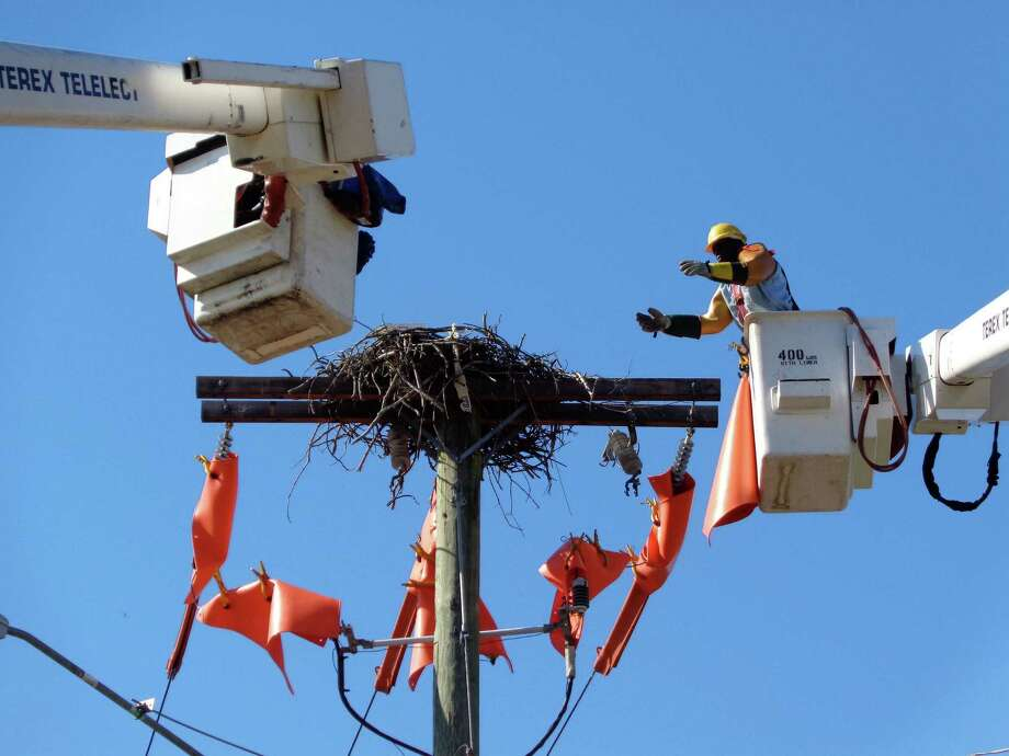 A crew from Connecticut Light & Power placed protective orange material over live wires with 13,000 volts of electricity while removing an osprey nest from a utility pole along Post Road, where a pair of the birds built the nest last spring and hatched two clutches of eggs over the summer. Photo: Meg Barone / Westport News
