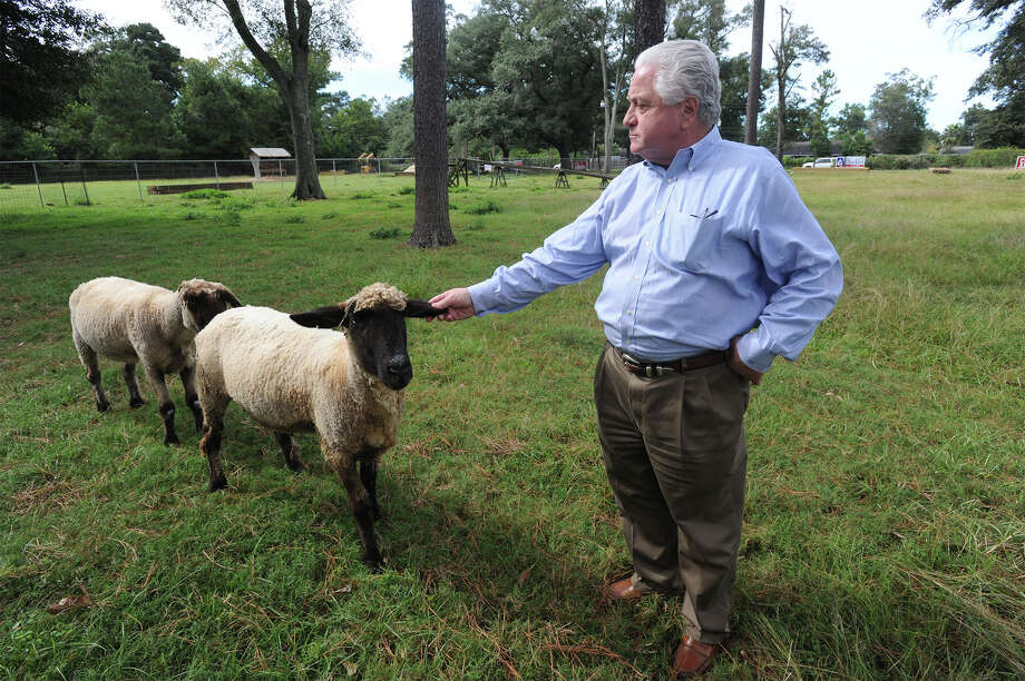 Sam Parigi pets one of the several sheep that famously graze grass on Phelan Boulevard. Parigi recently sold the property and says he will be moving the goats to a location on north 23rd Street.   Photo taken Monday, October 06, 2014  Guiseppe Barranco/@spotnewsshooter Photo: Guiseppe Barranco, Photo Editor