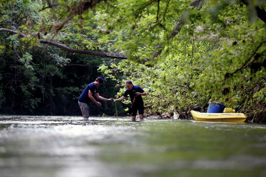 U.S. Fish and Wildlife Service botanist Jeffrey Hutchinson, right, and intern Colin Findley plant Texas wild rice Tuesday, Oct. 7, 2014, in the San Marcos River near the river's confluence with the Blanco River. Photo: William Luther, San Antonio Express-News / © 2014 San Antonio Express-News