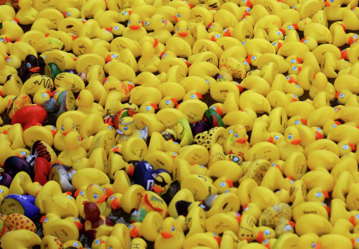 Over a 1,000 rubber ducks line up at the starting line before being raced in front of Anadarko's corporate headquarters Tuesday October 7, 2014 in The Woodlands. Anadarko held it's annual duck race, hosted by the International & Deepwater Exploration team. The event serves as a United Way fundraiser through the sale of individual and team ducks to be raced or entered into the