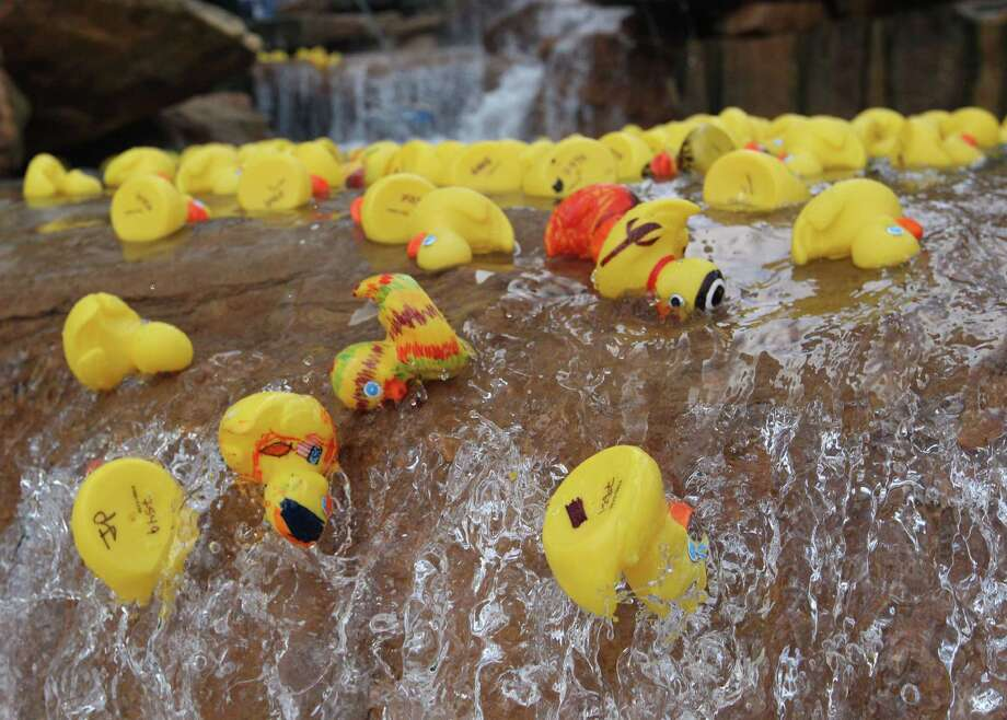 Over a 1,000 rubber ducks are raced in front of  Anadarko's corporate headquarters Tuesday October 7, 