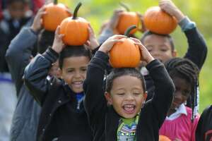 Adalberto Rodriguez, a kindergartener at Waltersville School in Bridgeport, holds a pumpkin on his head after going pumpkin picking with other members of his class at Paproski's Castle Hill Farm in Newtown, Conn. Thursday, Oct. 2, 2014.  Castle Hill Farm is one of the many local farms for pumpkin picking and has other fun activities like a petting zoo, corn maze and hay rides.  The pumpkin patch opened to the public on Saturday, Oct. 4 and will be open Monday through Friday from 2 to 5 p.m. and weekends from 11 a.m. to 5 p.m.
