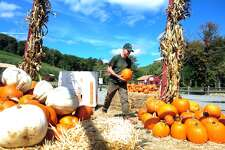 Todd Lalic, of Bridgeport, stacks pumpkins around displays of hay bales and corn stalks Wednesday, Sept. 19, 2012 at Silverman's Farm in Easton, Conn.