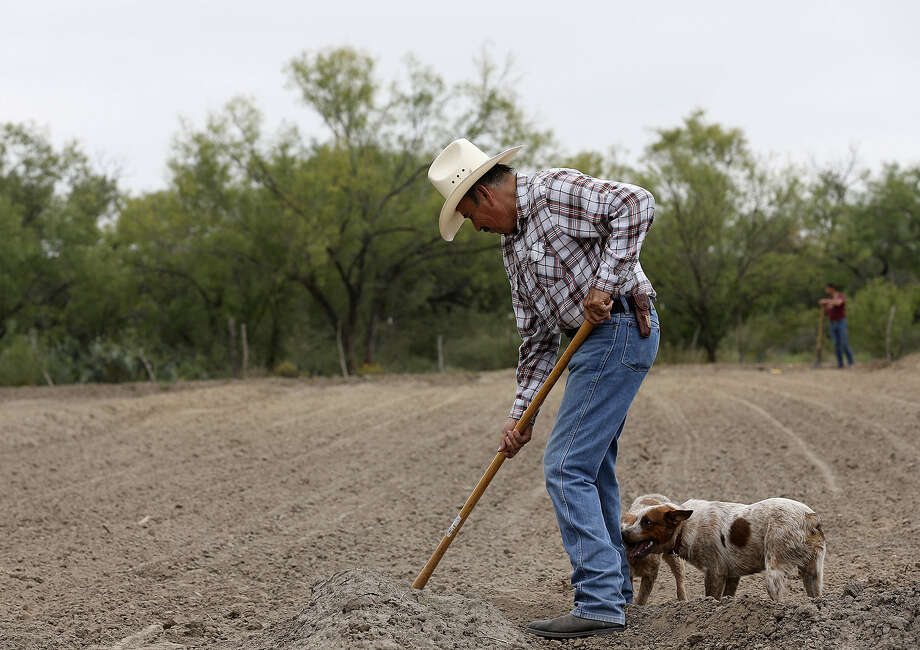 Mike Hernandez farms on land near a proposed coal mine in Maverick County. He is awaiting a court decision involving a permit for the mine before he decides on a buyout from its operator. Photo: Jerry Lara / San Antonio Express-News / © 2014 San Antonio Express-News