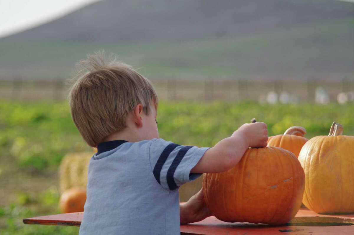 Kids can pick their own pumpkins at the Tolay Fall Festival this weekend in Petaluma.