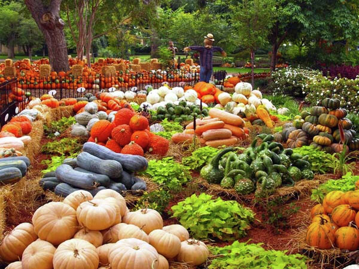 65,000: Number of pumpkins, gourds and squash that comprise the Pumpkin Village