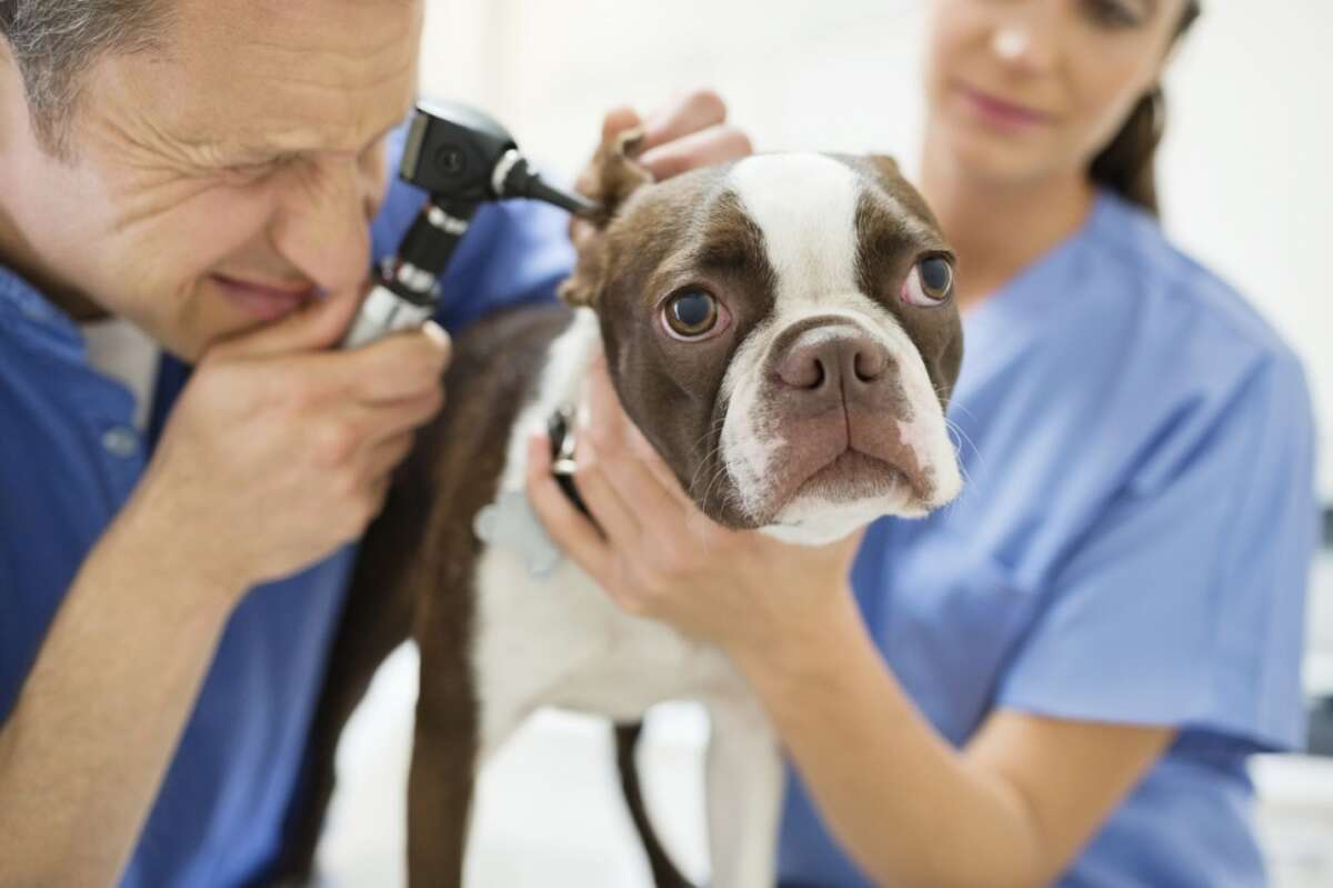 The dog you have may be carrying some hidden weight in the form of future medical problems. PetBreeds and the Veterinary Pet Insurance Co. have provided data on the top health issues plaguing some of the world's most common dog breeds.Source: PetBreeds