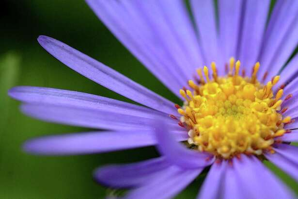 Fall asters planted now will offer some blooms this year. The real payoff will be next autumn, when their bold hues will turn heads.