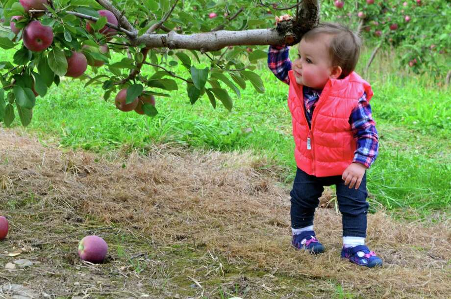 Norah Elizabeth is turning one year old this fall and she?s taking some first steps at Bowman?s Apple Orchard with her favorite aunt and her grandmother. (Megan Manfredo)