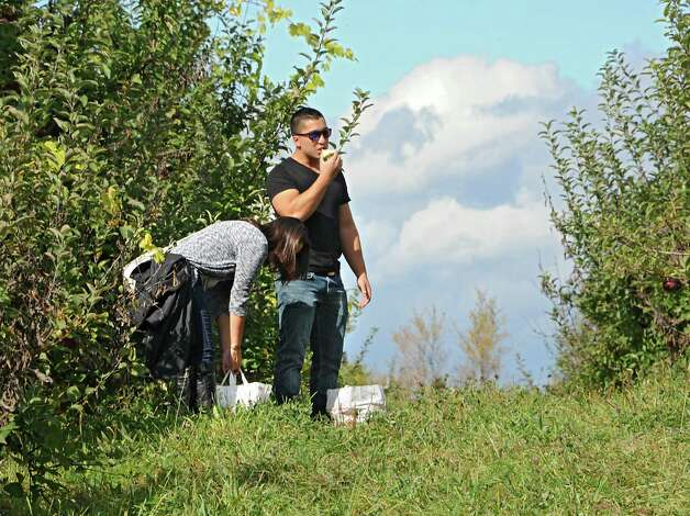 Eric Samson of Albany takes a break to try an apple while apple picking with his girlfriend Christina Destefano of Mechanicville at Indian Ladder Farms on Friday, Oct. 10, 2014, in Altamont, N.Y. (Lori Van Buren / Times Union) Photo: Lori Van Buren