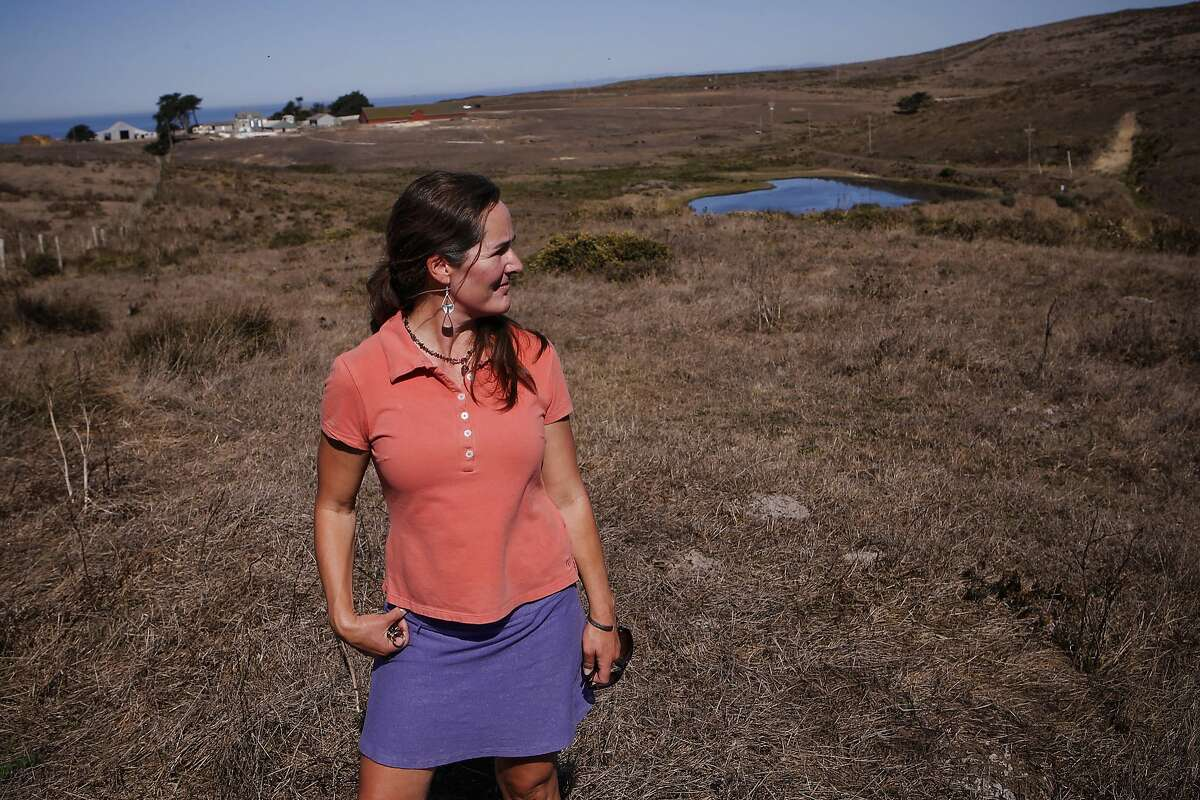 Amy Trainer, the director of the Environmental Action Committee, on the historic C Ranch a working organic dairy at the Point Reyes National Seashore, Calif., on Thursday Oct. 2, 2014. Ranchers are complaining about the tule elk along the Point Reyes National Seashore, because they have begun roaming onto their grazing lands, knocking down fences and foraging where their cattle forage. The ranchers want the elk removed and fenced off, but conservationists think they should roam free.