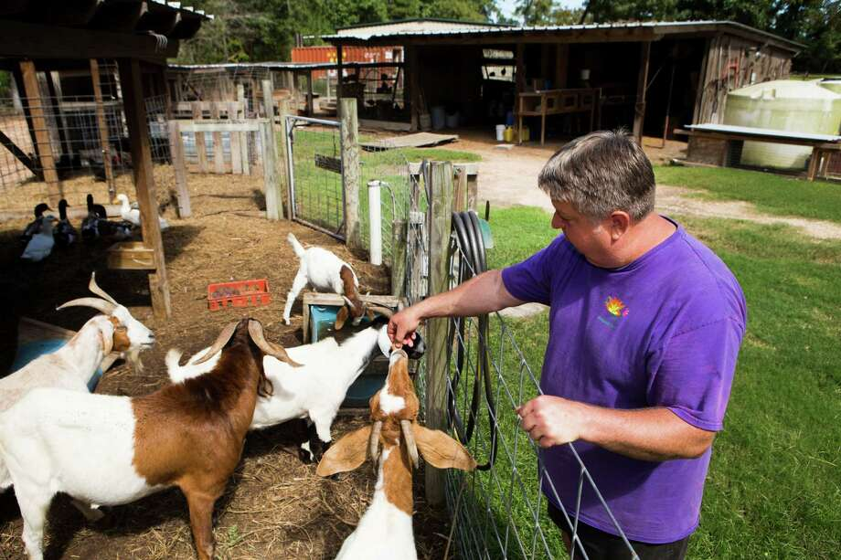 Jim Jenkins, whose Montgomery home is surrounded by a dozen acres of animals, feeds his goats at Sunshine Farm. He's near FM 149, where dozens of billboards promote planned housing and commercial developments. Photo: Brett Coomer, Staff / © 2014 Houston Chronicle