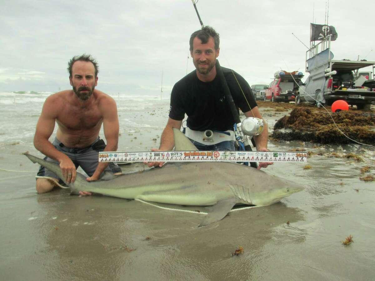 3rd Place, Shark Division, $5,000 Blayne Mozisek 71.5-inch-long blacktip shark