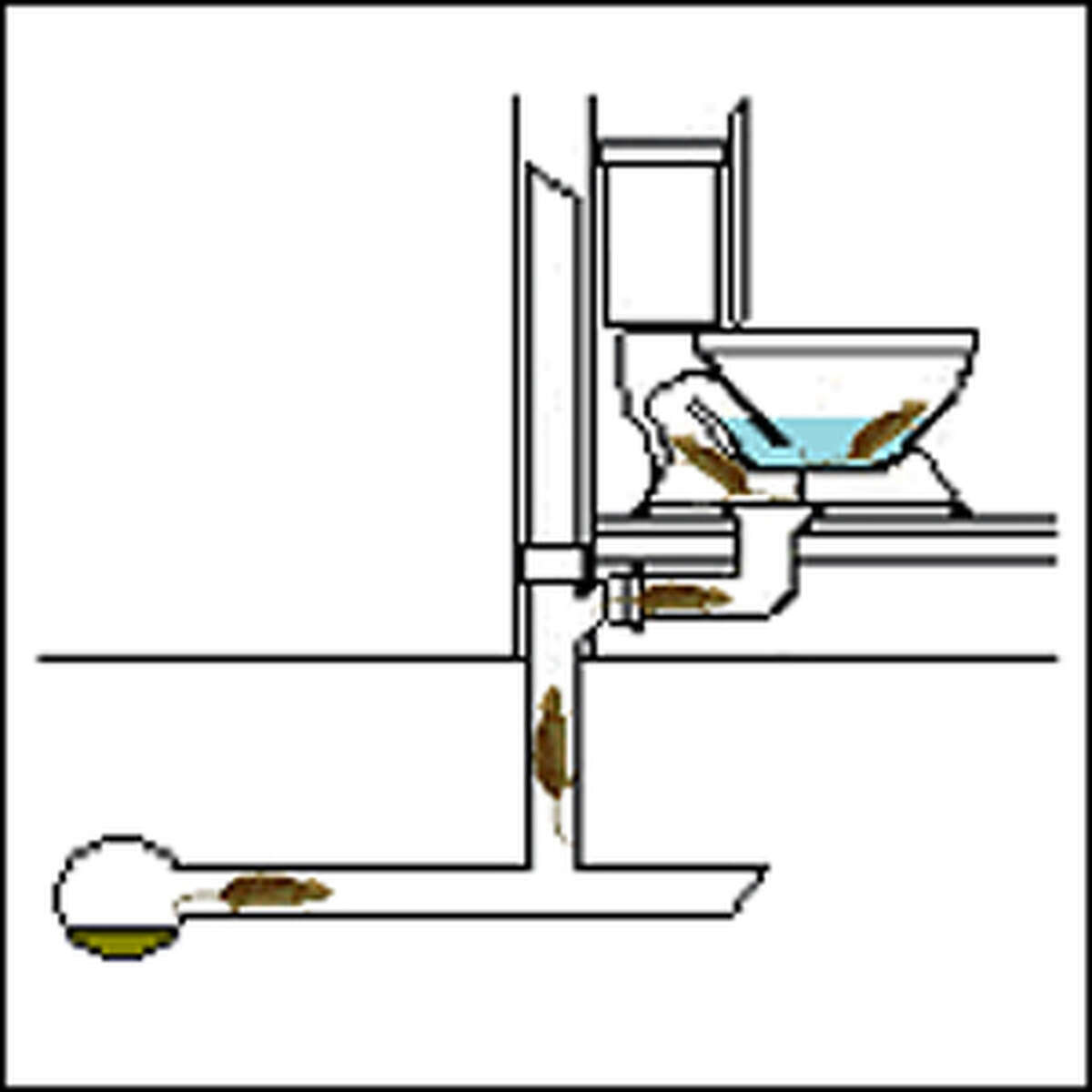 How does a rat get in your toilet? Rats follow food smells in the drains that lead from your house to the sewer system. They can climb the
