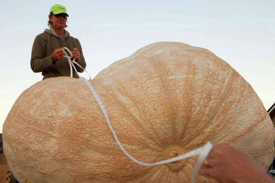 Eric Carlson takes official Great Pumpkin Commonwealth measurements of John Hawkley's pumpkin at the 41st Annual Safeway World Championship Pumpkin Weigh-Off in Half Moon Bay, Calif., Monday, Oct. 13, 2014. Hawkley of Napa Calif. was named as a favorite to win early in the day. (AP Photo/Alex Washburn) ORG XMIT: CAAW101 Photo: Alex Washburn, AP / AP FR171207