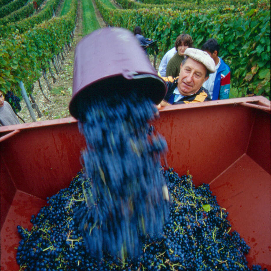 Le Cendange est arrivee (Razac-de-Saussignac, France)Le Vendange is the time when the grapes are harvested and it's thrilling to watch the grapes being gathered and prepared. This photo was taken at a small vineyard called Chateau Fongrenier-Stuart. It's fairly close to Monbazillac, home to some of the finest desert wines anywhere and a gem of the Dordogne region. — Robin Hill