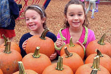 Plenty o' pumpkins picked fresh from the patch, admired here by Rowan Troy and Lizzy Sullivan, will be featured at the annual Pumpkin Carnival on Saturday at Tokeneke Elementary School. The fair, from 10 a.m to 4 p.m., will have a host of Halloween-themed activities, amusement rides and seasonal treats from local vendors. For details, check the story on page A11.