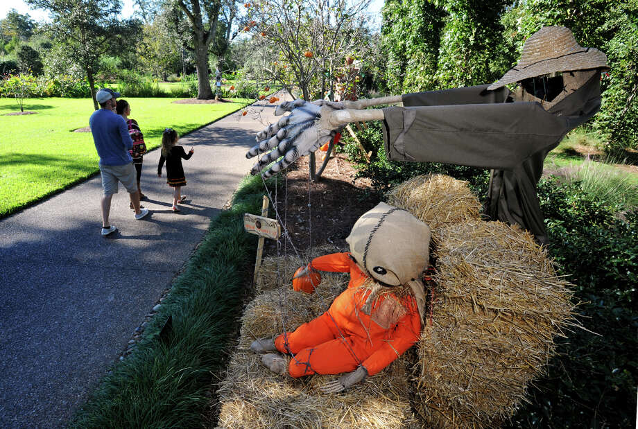 From left, Cody Whitworth, Leightyn Beard, Kelsey Beard, Korbyn Whitworth walk past one of several scarecrows on exhibit at Shangri La through until the Autumn Fair on November 1. More than 60 scarecrows, 4,300 pumpkins and 27,000 seasonal colors are on display. Photo taken Wednesday, October 15, 2014 Guiseppe Barranco/@spotnewsshooter Photo: Guiseppe Barranco, Photo Editor
