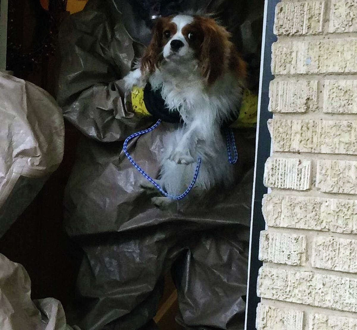 HAZMAT TEAM TAKES BENTLEY AWAY: Bentley, the 1-year-old King Charles Spaniel belonging to Nina Pham, the nurse who contracted Ebola, has been taken from Pham's Dallas apartment and will be cared for at a decommissioned naval air base. A city spokesman said Bentley is staying in the former residence of the executive officer at the decommissioned Hensley Field, which is owned by the city. Last week, Spain created an uproar when it put to death a dog owned by an Ebola patient on the chance that it might have the disease.