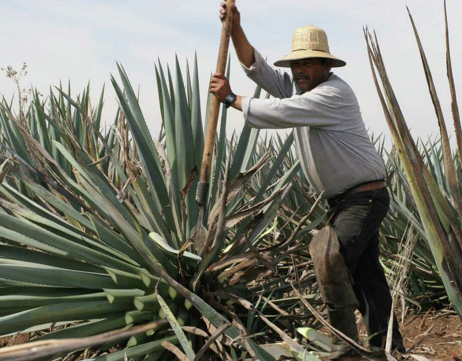 The Tequila Interchange Project works directly with agave growers and producers — such as Don Demetrio's Raicilla Taverna (left) and Jimador in Atotonilco, Jalisco, Mexico. The organization will hold seminars at the Experience Agave event this week. Photo: Courtesy Photos