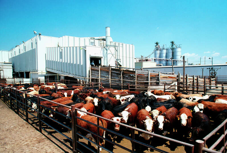 minnesota slaughterers meat packers photo