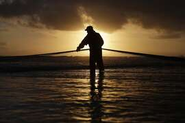 Portugal: A fisherman pulls a net out of the sea on the Caparica coast, near Lisbon, Monday, Oct. 6, 2014. The fishermen trawl near the shore and then pull the nets out of the sea onto the beach by using agricultural tractors.