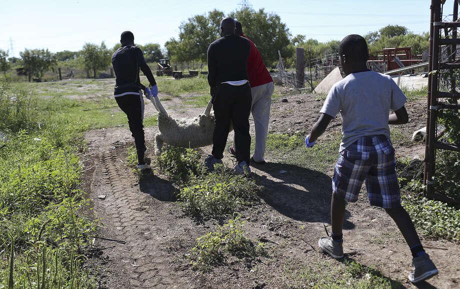 Men carry a sheep to be sacrificed for Eid al-Adha near Van Ormy on Oct. 4. Photo: Photos By Lisa Krantz / San Antonio Express-News / SAN ANTONIO EXPRESS-NEWS