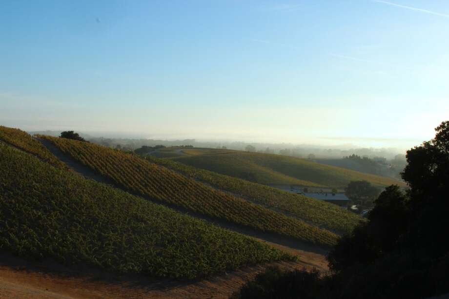 Due to the typically arid conditions in Paso Robles Wine Country, harvesting grapes can take place from late August through November. But regardless of the season, the scenery can be stunning, as seen in this view of the Eastside from Niner Wine Estates. Photo: Niner Wine Estates