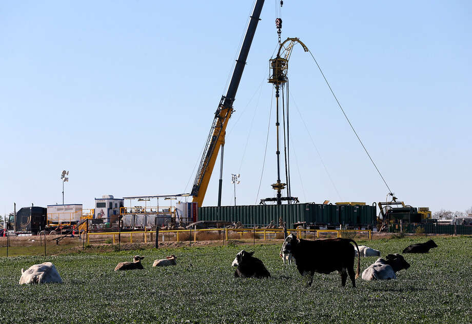 Cattle rest on a field near Helenas in Karnes County. In the last four years, more than 2,000 drilling permits have been issued for Karnes County. Increased production is impacting gas prices at the pumps. Photo: Express-News File Photo / ©2013 San Antonio Express-News