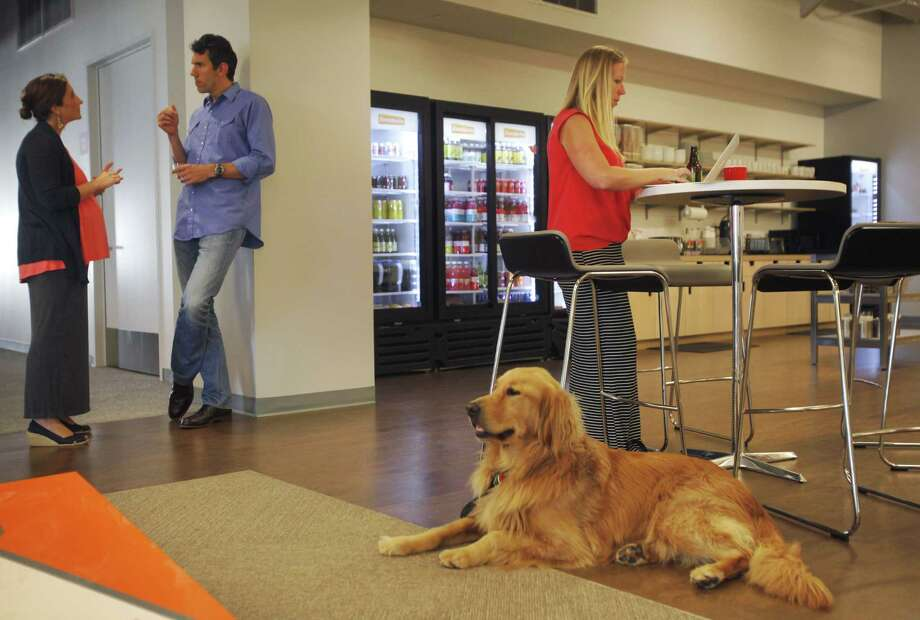 Lauren Hoe (right) works in the cafe area as her dog, Rupert, keeps her company while co-workers Julia Taylor (left) and Rob Mishev chat at Eventbrite's headquarters. Photo: Leah Millis / Leah Millis / The Chronicle / ONLINE_YES