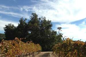 Autumnal experiences in Paso Robles - Photo