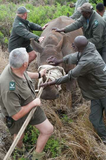 how to become a wildlife veterinarian in south africa