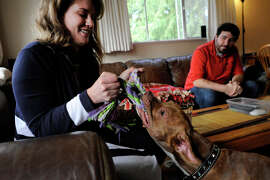 Whitney Clark plays tug-of-war with her pit bull mix Scarlett at their Berkeley apartment with boyfriend Chris Mortweet.